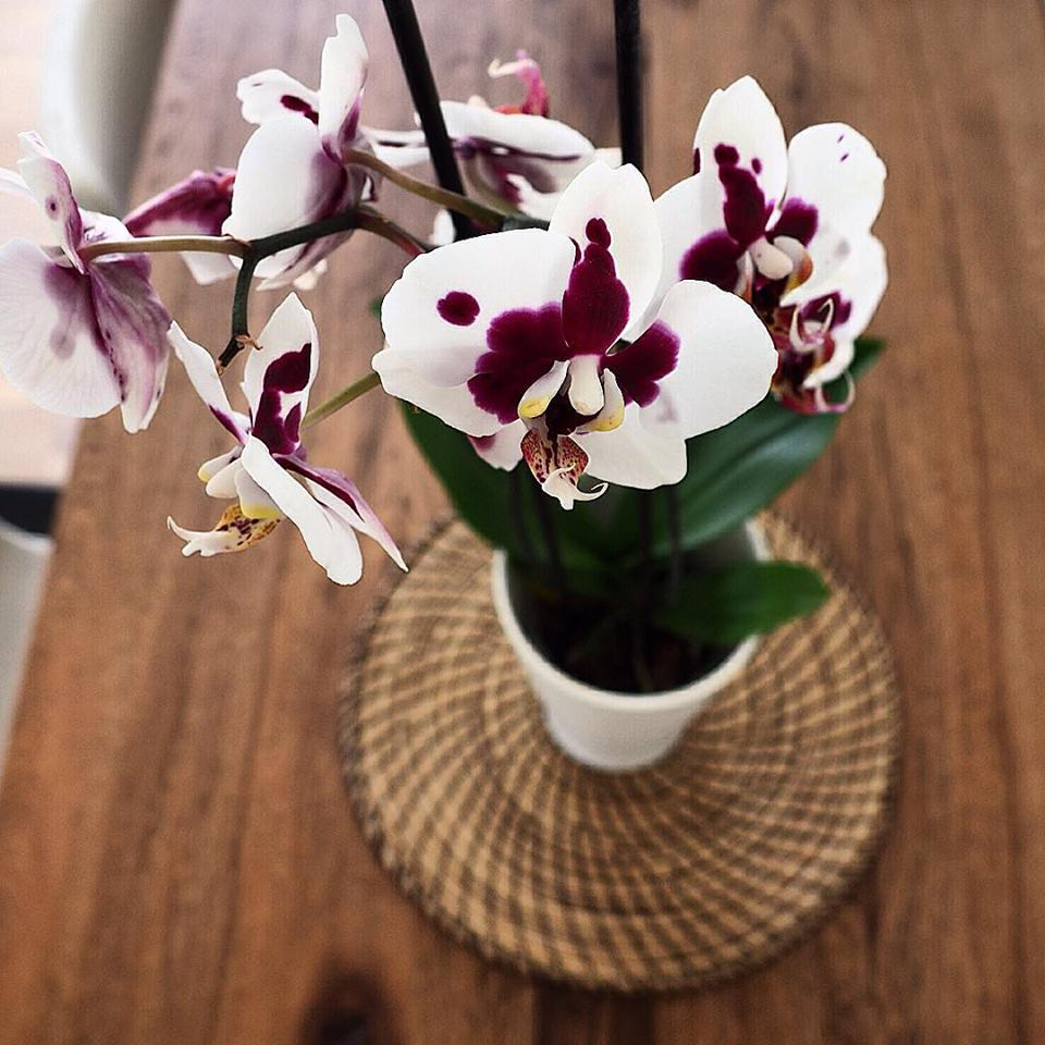 orchid notice beauty